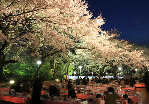 夜桜風景(c)TOSHIMAEN Co.Ltd.